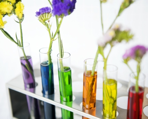 test tubes of coloured liquid with flowers in them